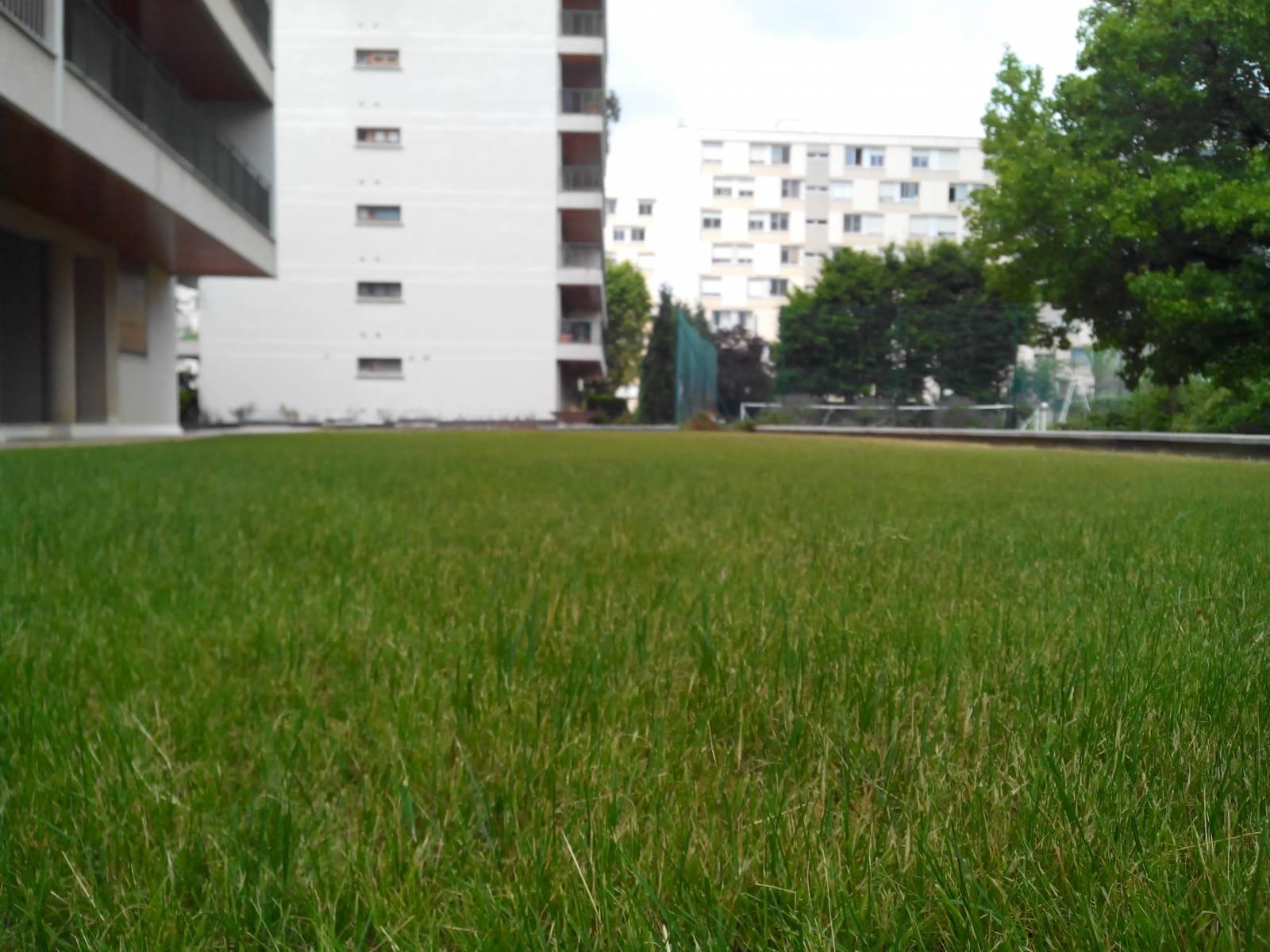 tonte de gazon pour le jardin